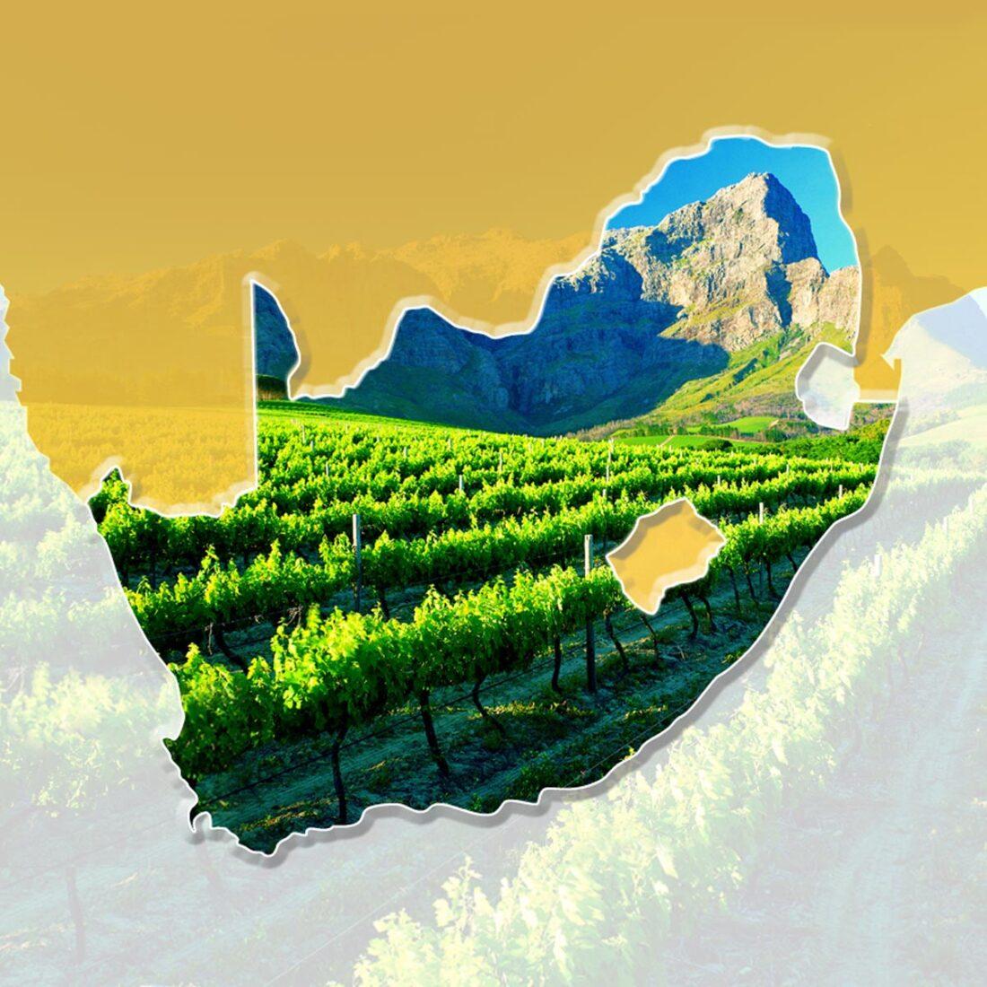 Dettaglio della homepage di Opportunità di Commercio e Investimento in Sud Africa CD-Rom e sito web in doppia lingua
